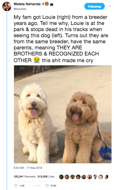 Twitter screenshot to dog brother reunited