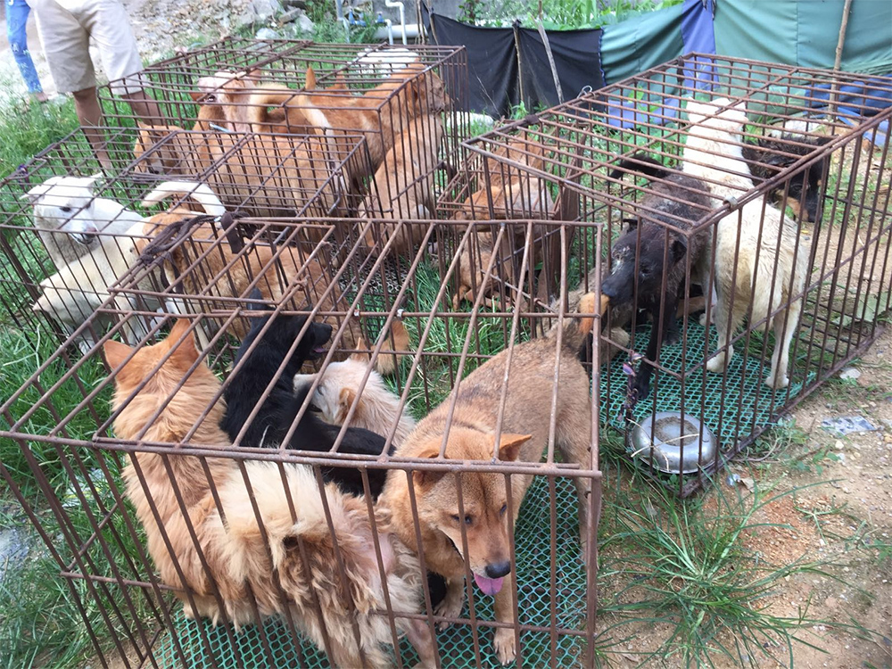 dogs trapped in cages