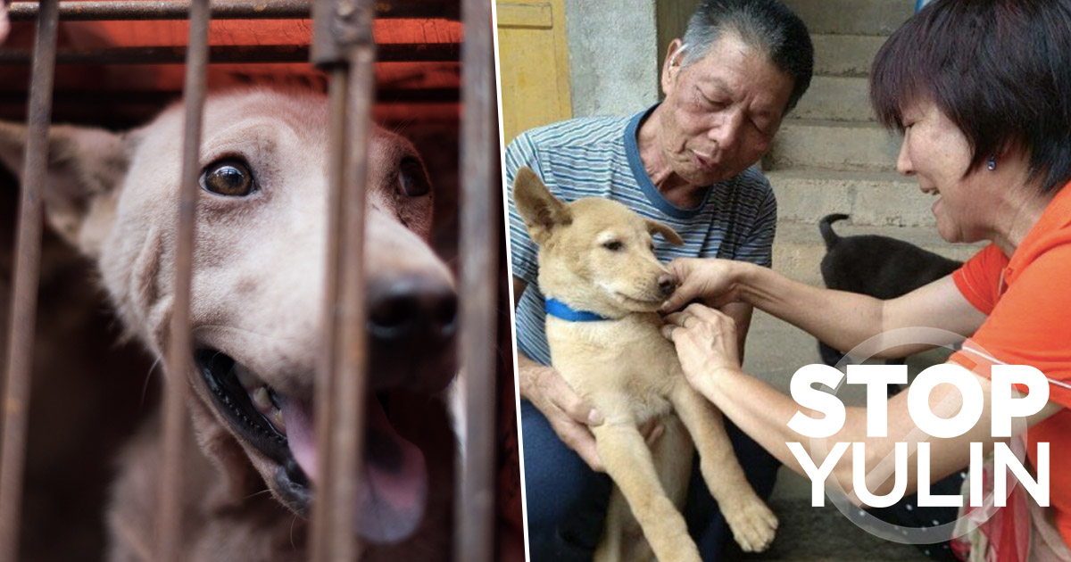 Western Saviours Can't Fix The Dog Meat Trade In China On