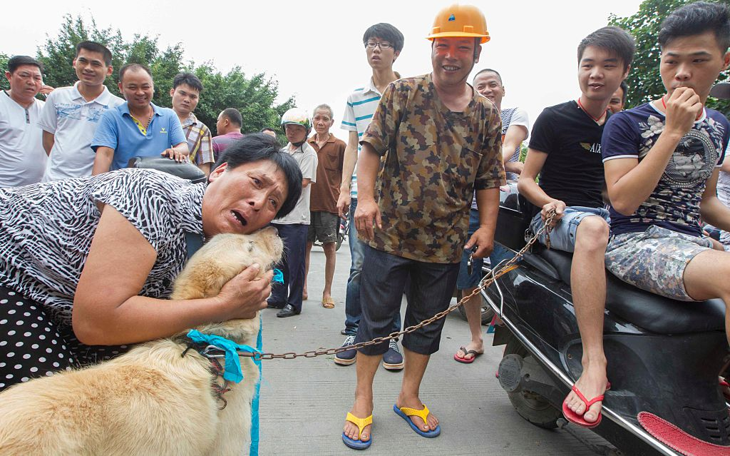 Campaigners Call On Dog Meat To Be Banned In UK GettyImages 539620152
