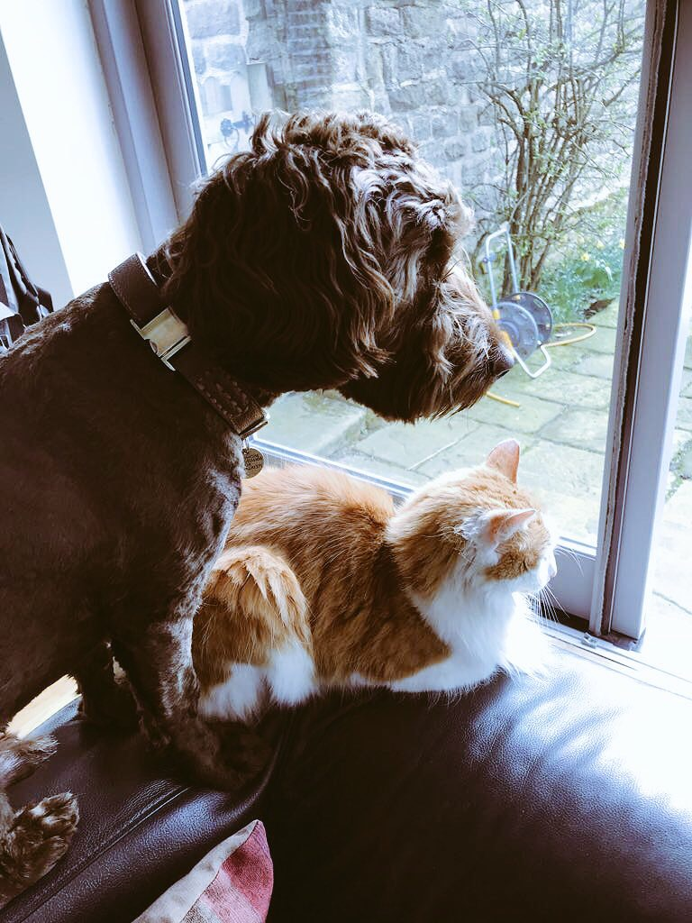 Claude the cat and Bert the dog