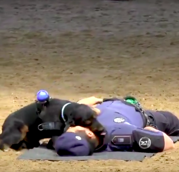 Police dog learns CPR