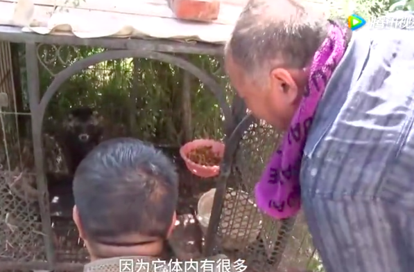 Man buys raccoon thinking it's a dog