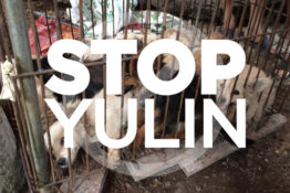 Puppies trapped in a cage at Yulin dog meat festival