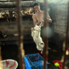 Cats Are Being Butchered At Yulin Meat Festival Too