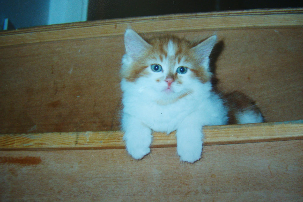 World's oldest cat Rubble, as a kitten