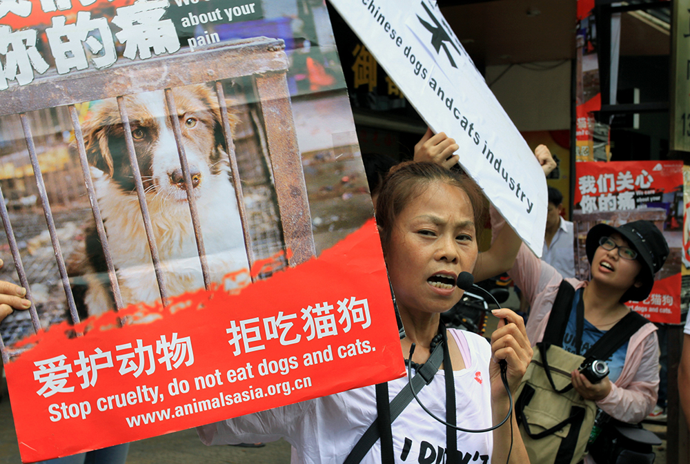 Animal rights activists protest against eating dog meat outside dog meat restaurants in Yulin