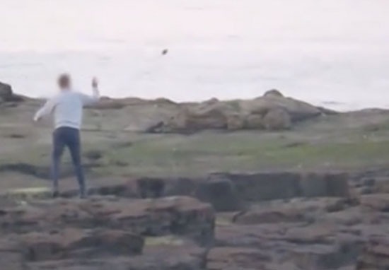 Throwing rocks at seal