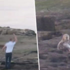 People Film Themselves Throwing Rocks At Seals Forcing Them To Jump Off Cliff