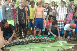 Still of footage showing mother of two cut from python in Southeast Sulawesi