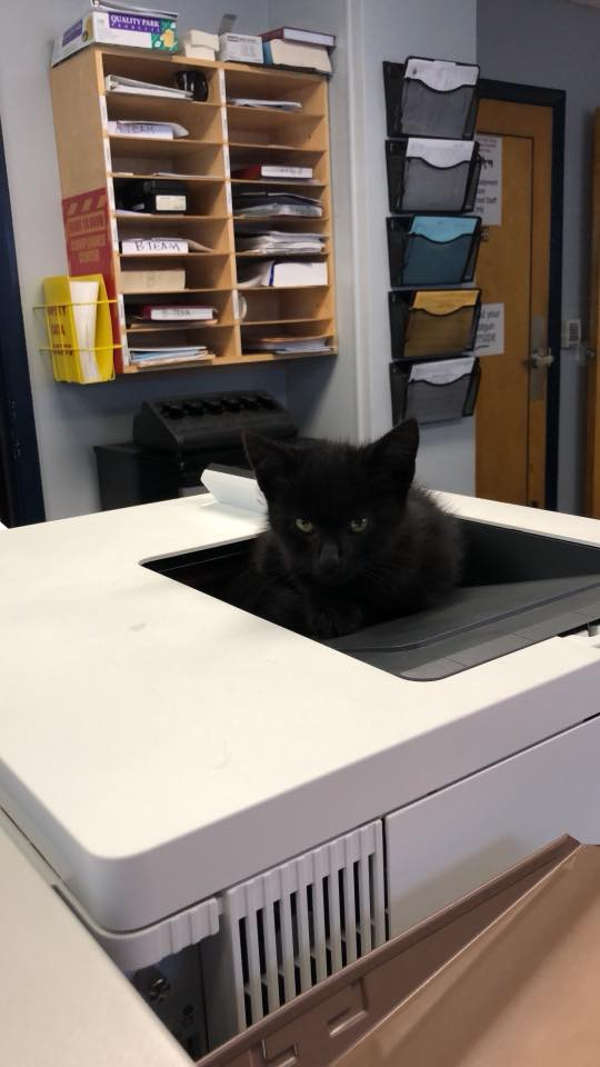 Kitten in Sheriff's office