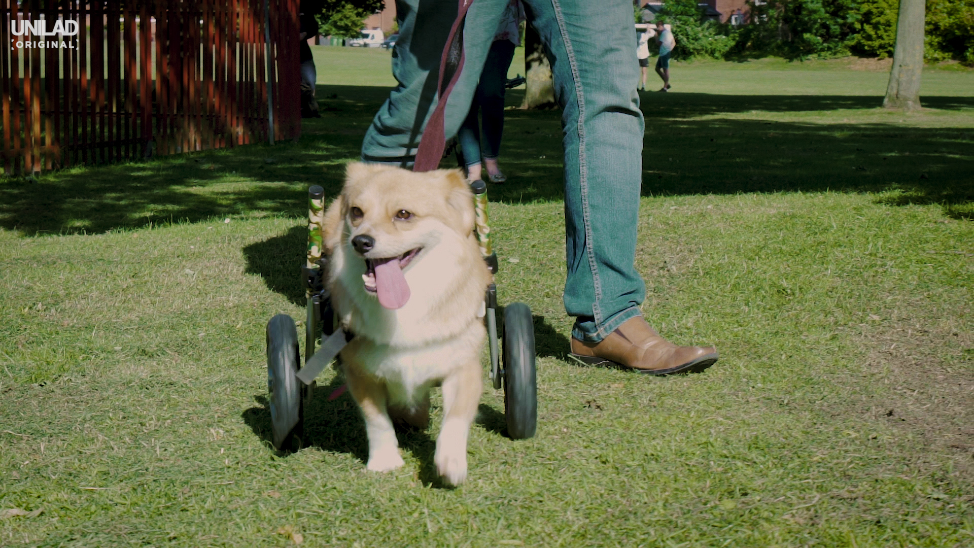 Couple Rescue Disabled Dogs And Give Them Wheelchairs Disabled Dogs Edit 2.00 04 31 10.Still018
