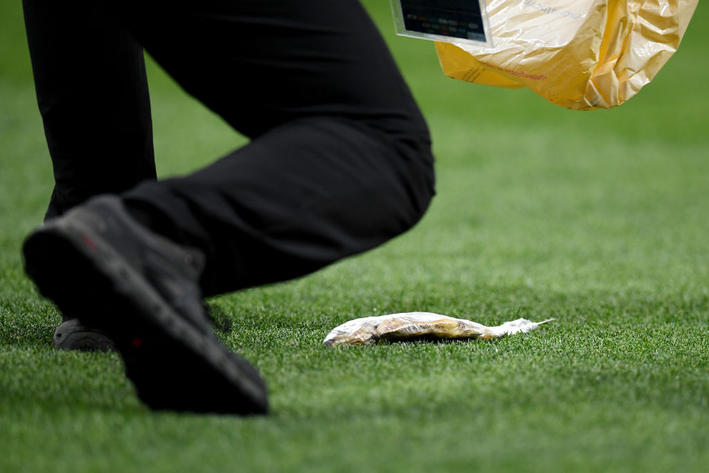 fish on pitch