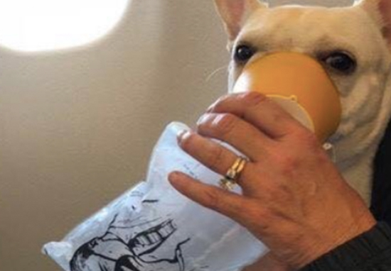 JetBlue flight attendants saved dog's life.