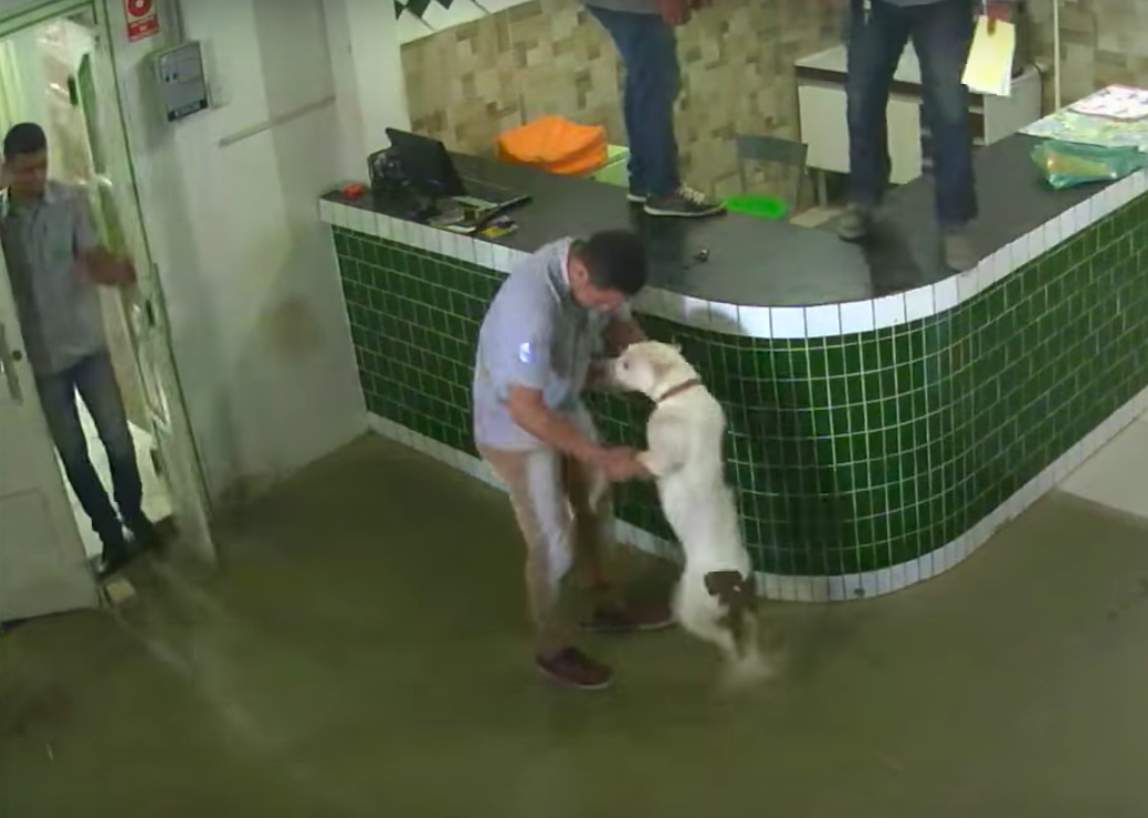 Workers Left Terrified After Being Approached By Friendly Pit Bull Playful Pit Bull 1