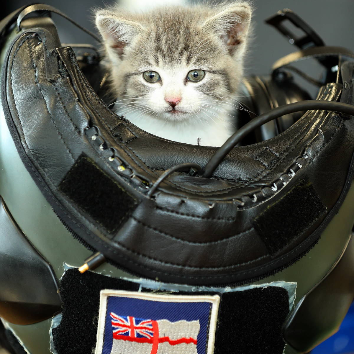 "Meet Tigger – the kitten which survived a 300-mile journey hiding INSIDE the bumper of a navy helicopter pilot's car. See SWNS story SWKITTEN. The cat endured a day's journey from Birmingham Airport to the Royal Naval Air Station Culdrose near Helston in Cornwall clinging to the rear bumper of Lieutenant Nick Grimmer's BMW. It was only the day after the epic journey that 32-year-old Nick heard ""very quiet meowing"" coming from his car – and began to investigate. ""I'd landed at Birmingham after a holiday and travelled via Bristol and Bath before arriving in Cornwall quite late,"" said Nick, who flies submarine–hunting Merlin helicopters for a living with 814 Naval Air Squadron – known as the Flying Tigers. ""I looked in the boot, under the bonnet and climbed all over and under it and still couldn't find what was making the noise. ""I called up some of our air engineers who came and helped me to start dismantling my pride and joy. On taking off the rear bumper we were greeted by a tiny tiger-striped kitten. ""He must have had a long journey but remarkably is unharmed. I am never late for work and was left with no option but to take my new friend in with me. The place he has felt most comfortable is in my flying helmet, which is the only place he is able to sleep."""