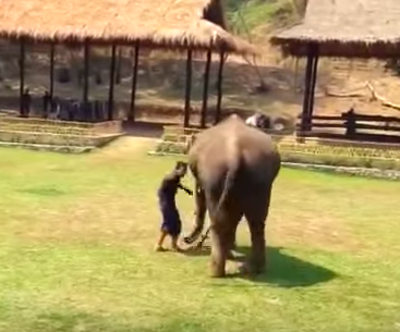 Elephant Rushes To Rescue Of Caregiver After Hes Attacked Screen Shot 2018 07 01 at 19.09.38
