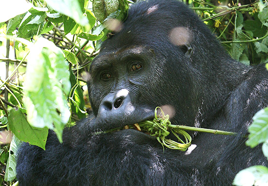 Democratic Republic Of Congo To Start Drilling For Oil In Protected Wildlife Parks WEBTHUMBNEW DR Congo
