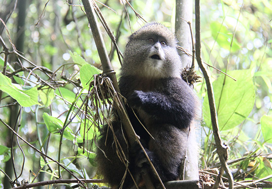 Democratic Republic Of Congo To Start Drilling For Oil In Protected Wildlife Parks WEBTHUMBNEW monkey