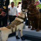 Hero Dog Gets Her Own Statue After Saving 12 People's Lives