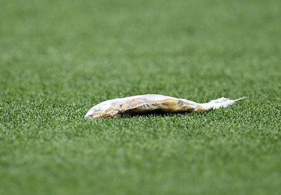 dead fish on pitch