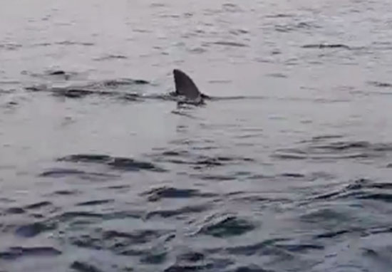 Great White Shark circles kayakers