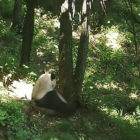 Tourists Throw Stones At Panda At Park To Wake It Up
