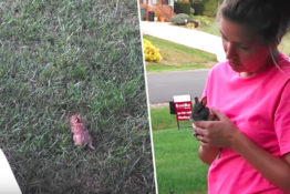 Stills of pet bunny before being captured by a hawk