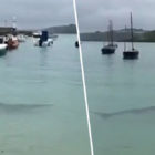 People Urged To Stay Out Of The Water After Huge Shark Is Spotted In Cornwall