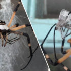Guy Films Terrifying Spider Mating Ritual