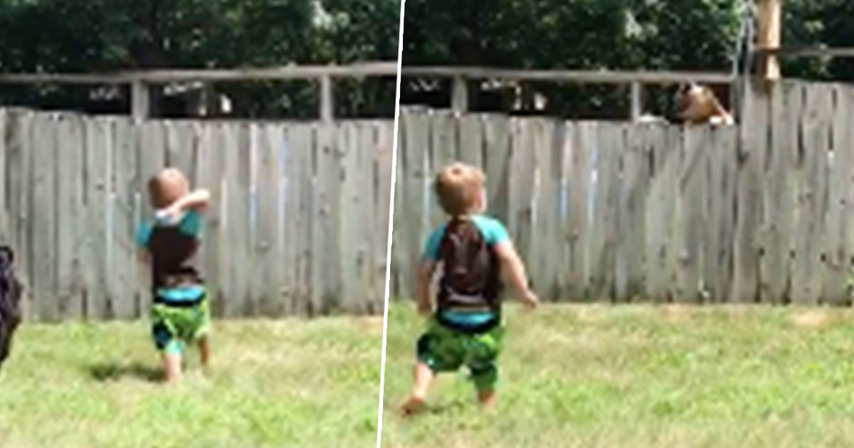 Best Friends Toddler And Dog Play Fetch Over Fence