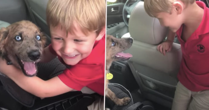 Little boy and puppy become best friends.
