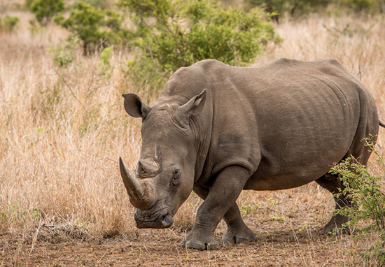 365 poachers convicted in last six months.