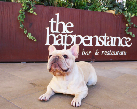 Pop up cafe welcomes French Bulldogs