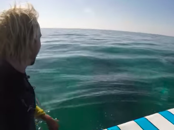 Whales approach paddle boarder.