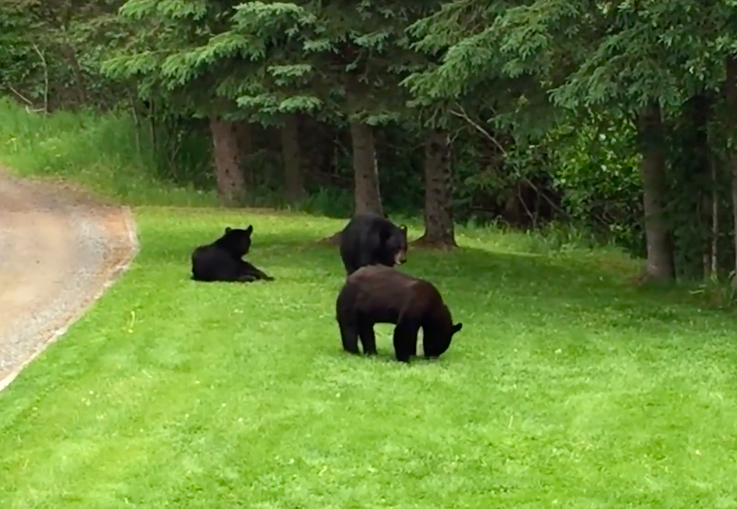 Dad And Son Caught Killing Black Bear And Her Two Newborn Cubs Screen Shot 2018 08 10 at 15.13.26