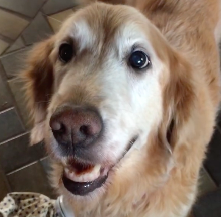 Dog's reaction to finding out she's cancer free