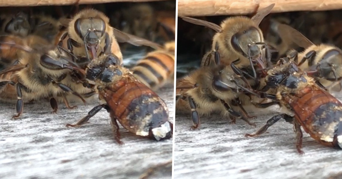 Bee Almost Dies After Falling Into Honey, Fellow Bees Come Out To Help Her beesthumbnail