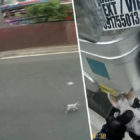 Biker Stops Traffic To Rescue Kitten And Take It Home