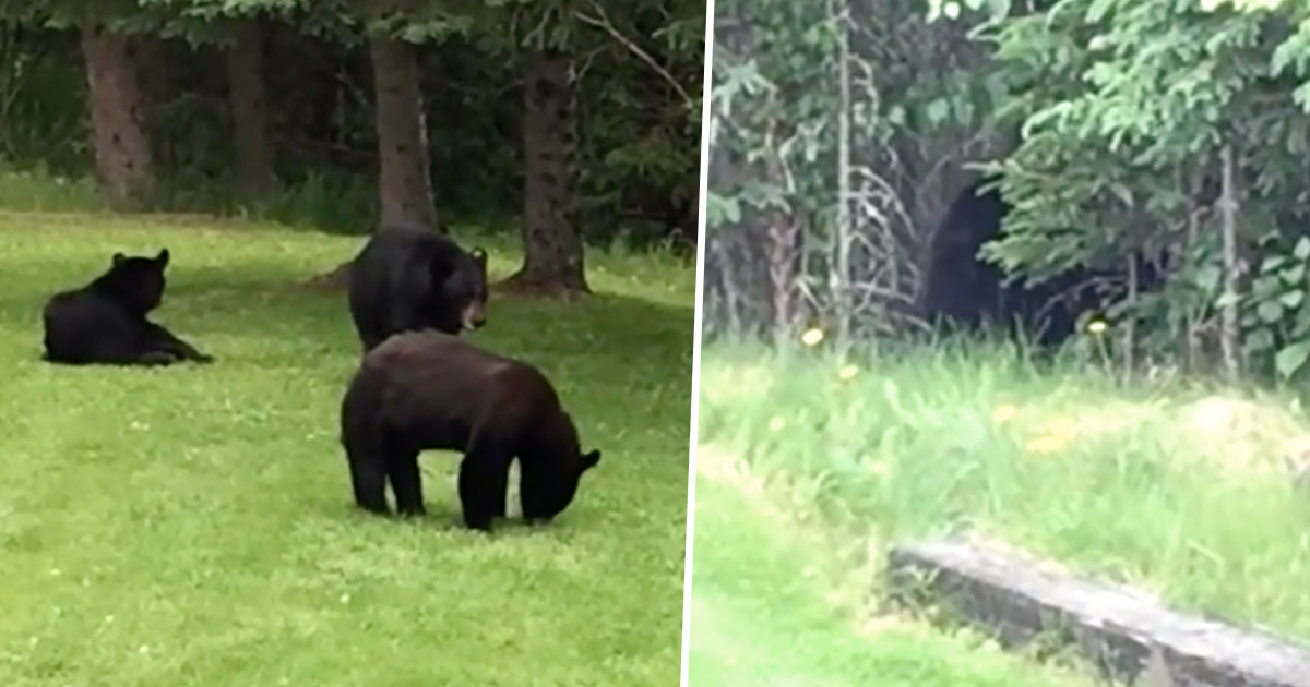 Dad And Son Caught Killing Black Bear And Her Two Newborn Cubs blackbear
