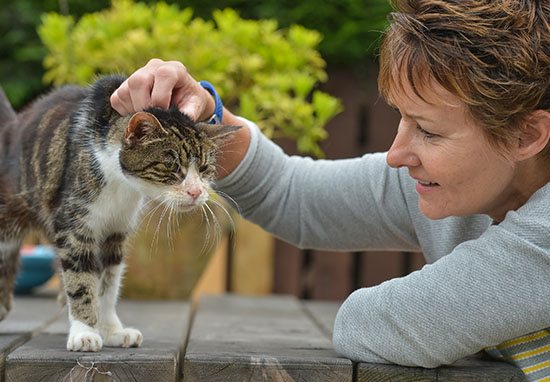 17 Year Old Cat Finds Way Home After 13 Years Missing cat1