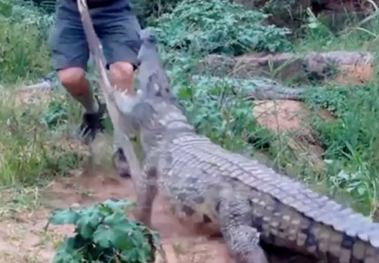 Crocodile attacks farmer