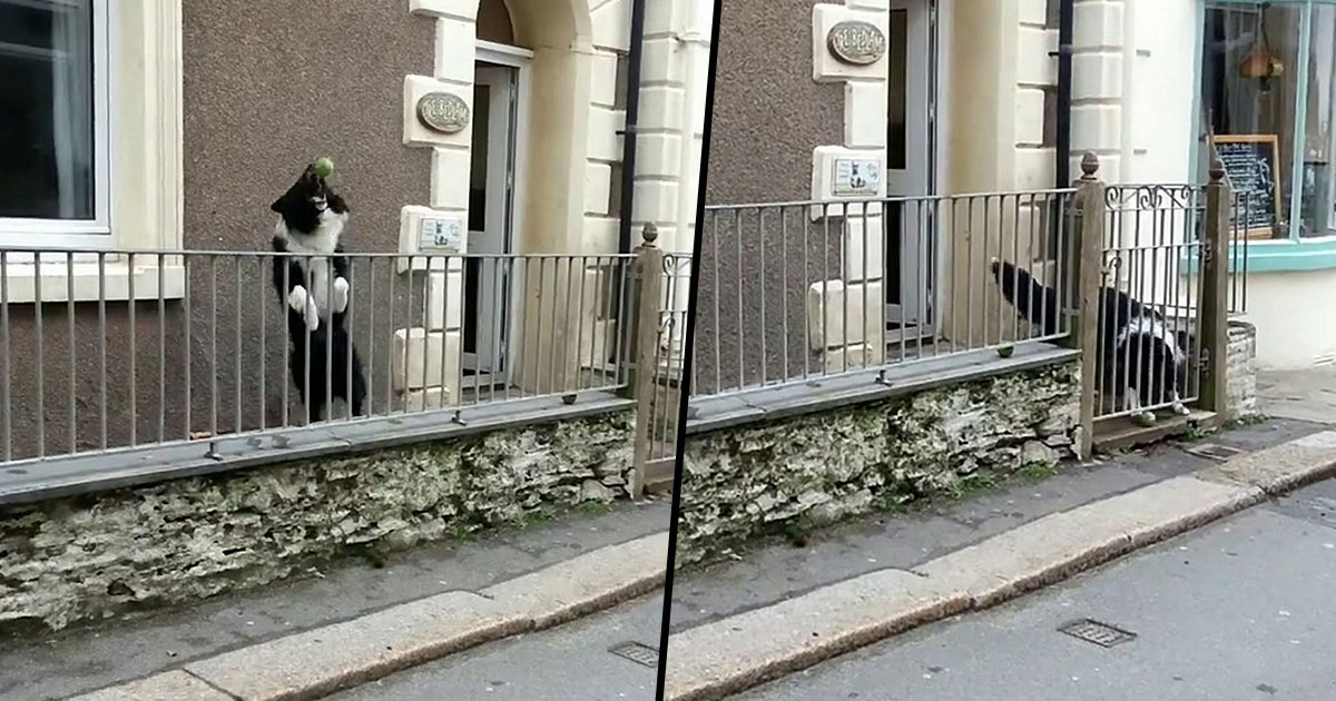 Dog Always Wants To Play Catch When People Walk Past His Gate dog catch fb