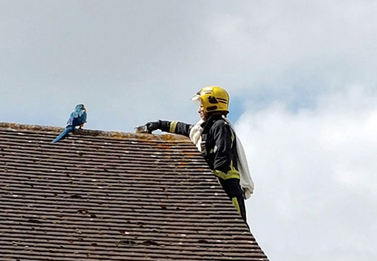 Parrot Tells Fireman To 'F*ck Off' After Getting Stuck On Roof