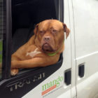 This Dog Has Perfected The White Van Man Pose