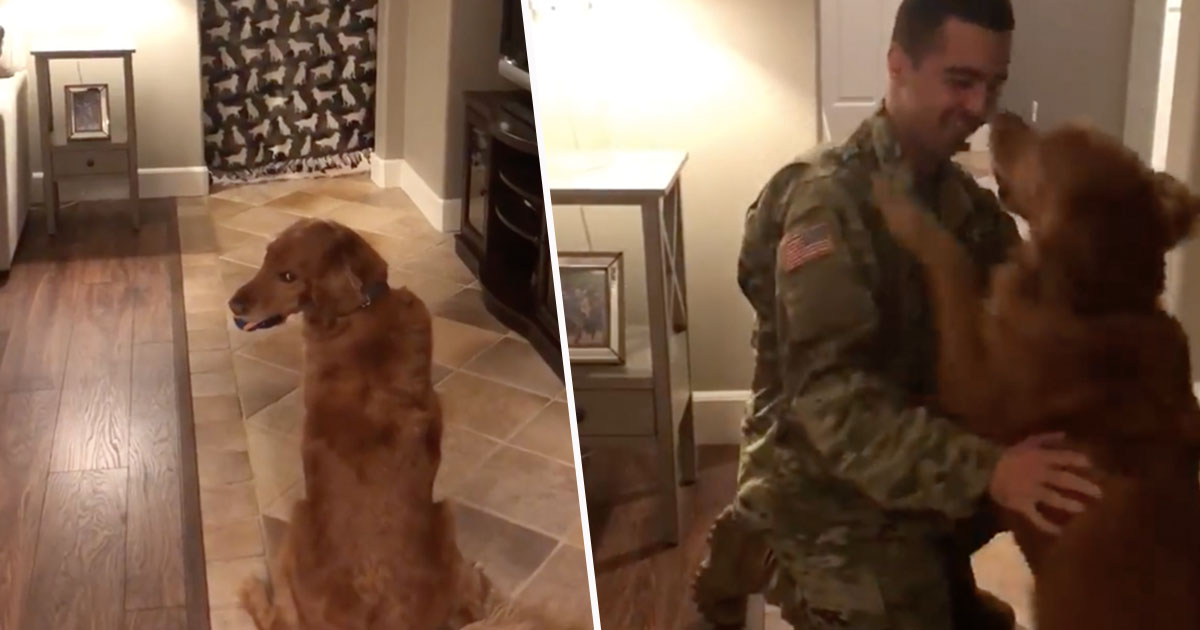 dog welcomes owner home