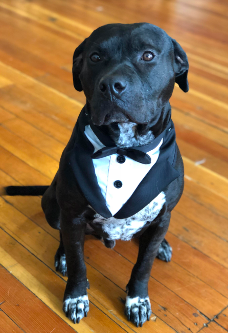 best man dog wedding