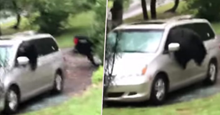 black bear smashes car