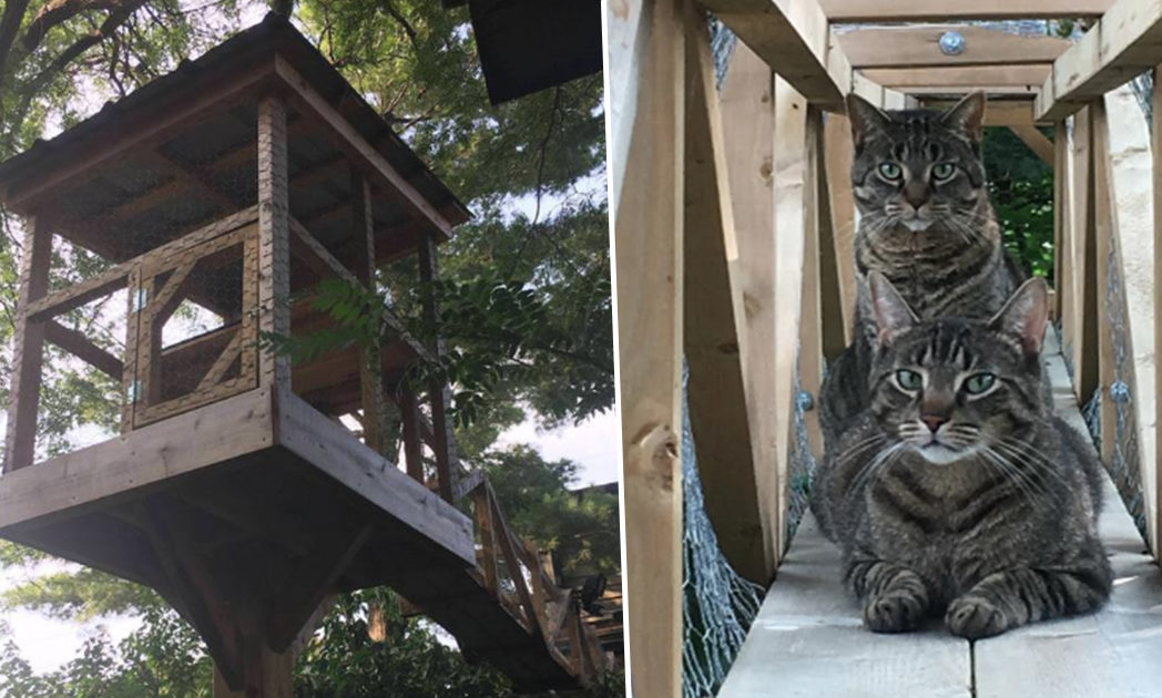 cat treehouse