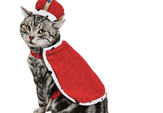 Adorable cat costumes are here.